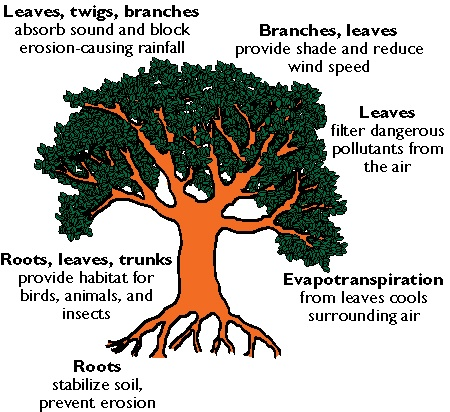 essay on value of planting trees Our life is dependent upon trees there is a long association of man and trees since the hoary past man and trees have been the two major creations of naturein his prehistoric days man turned to trees and plants to collect the things vitally necessary for his existence.