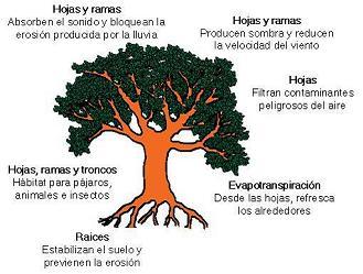 Las plantas y su medio ambiente for Medio en el que habitan los arboles