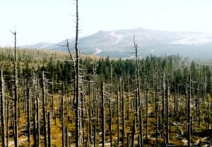 acidic gases, clouds, fogs, rain - dead mountain forests