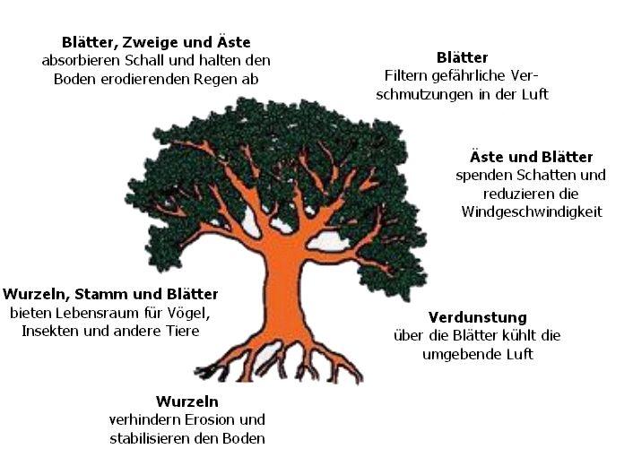 Charmant Was Braucht Eine Pflanze Arbeitsblatt Wachsen Bilder ...