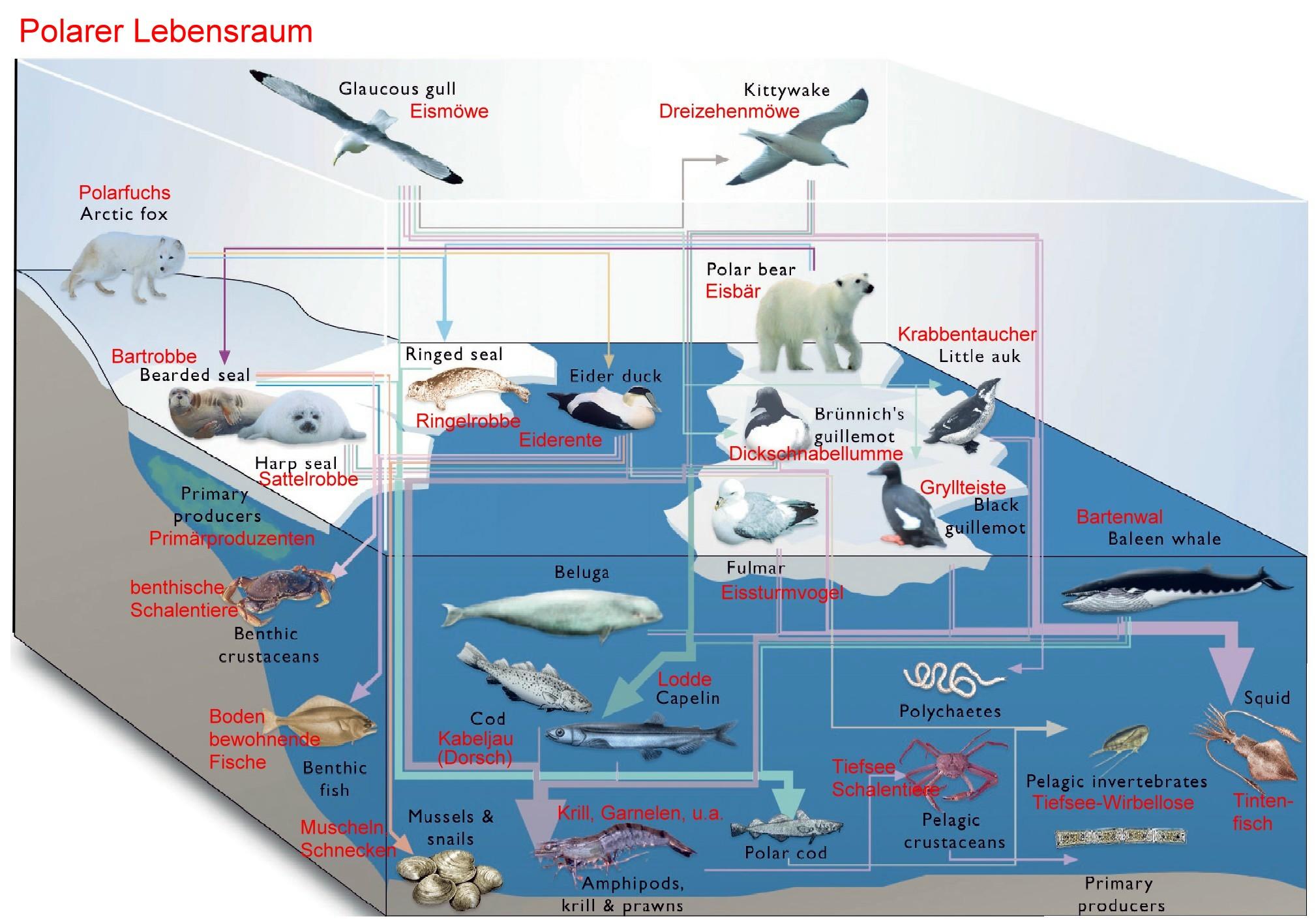 Beliebt Bevorzugt Leben in der Arktis #MX_81