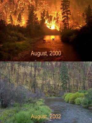 forest during fire / after reseeding